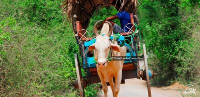 Things to do Around Habarana Sri Lanka