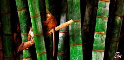 Wild Life in Sri Lanka