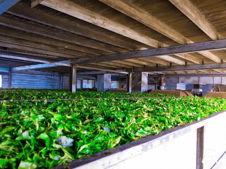 Dambatenne Tea Factory