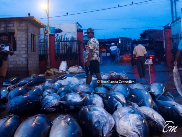 Negombo Fishing Village