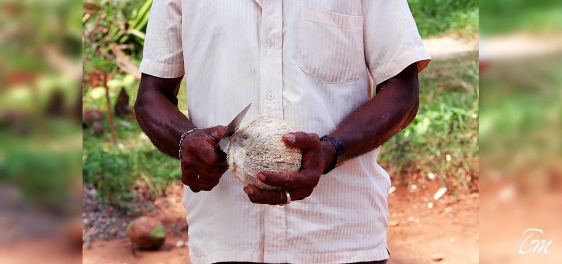 7 Days Heritage Package For Sri Lanka